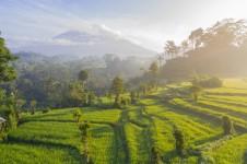 Destinasi Wisata yang Memiliki Keindahan Alam Hijau? Bali Menjadi Tujuannya