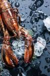 Membudidayakan Lobster Air Tawar? Simak Cara Ini