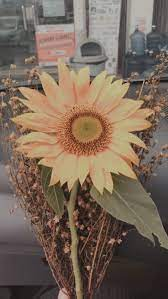 Ramalan Zodiak Hari Ini Kamis 16 September 2021,  Cancer Berusaha Setia, Virgo Semakin Harmonis